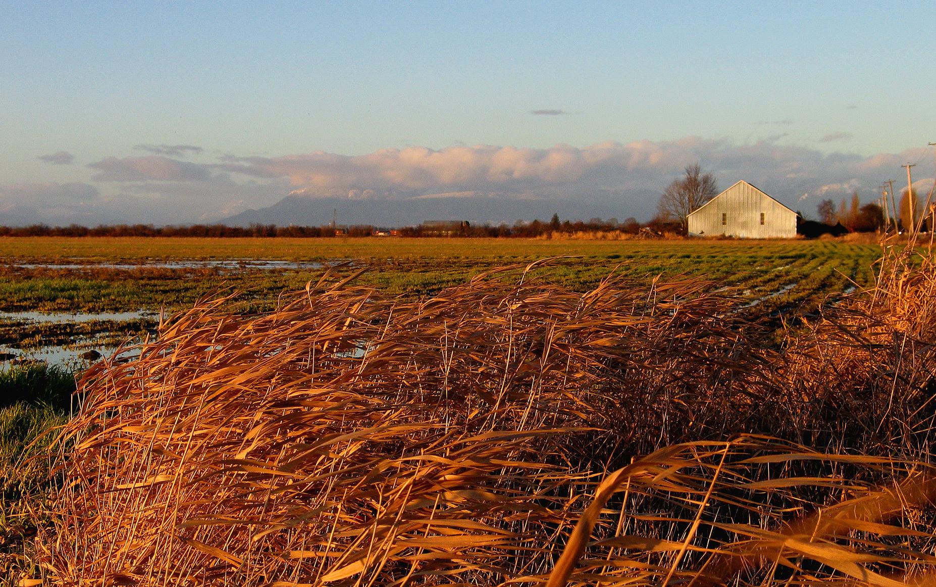 Bill 15 - Agricultural Land (Photo: Gord McKenna)