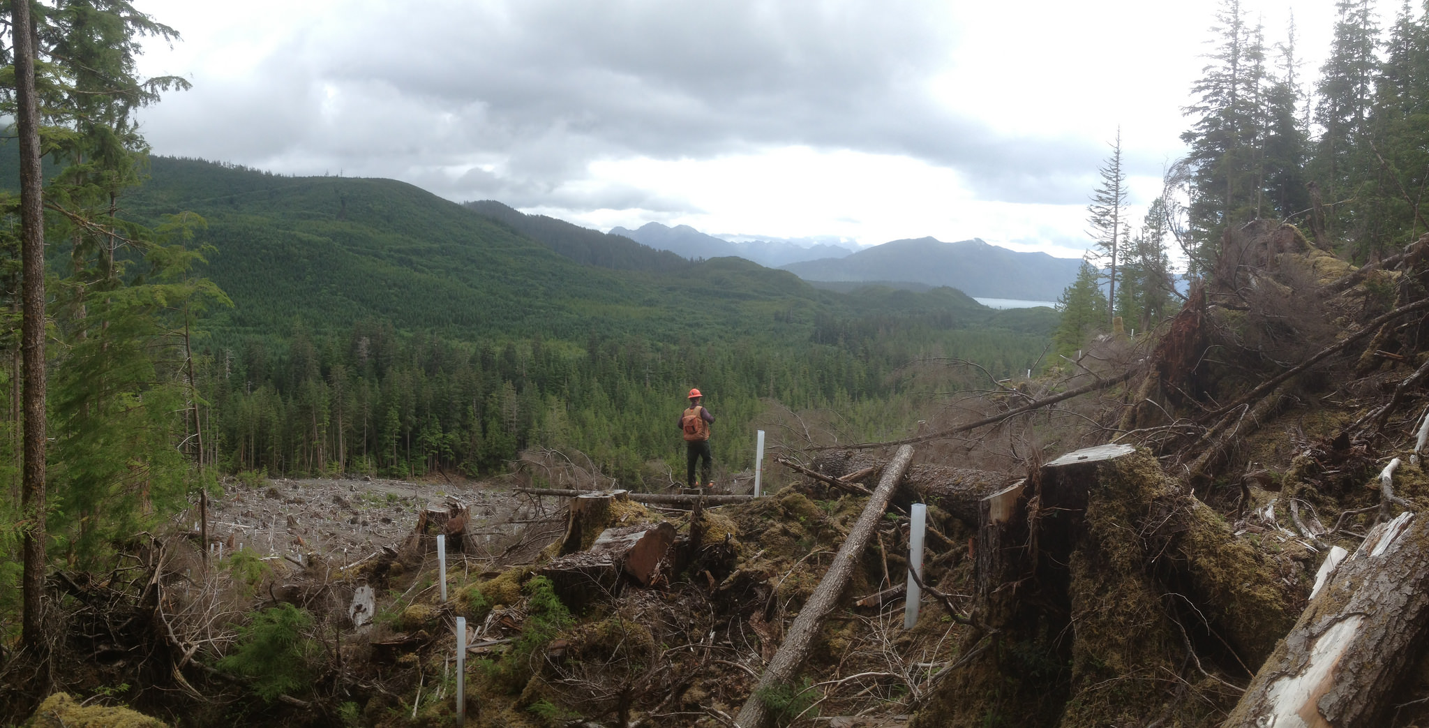 Logging in Haida Gwaii (Photo: Dru via Flickr)