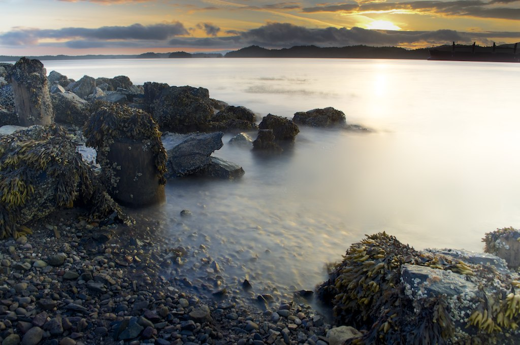 Rocky shore with seaweed, Prince Rupert BC