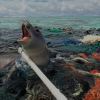 Seal trapped in plastic (Nels Israelson/Flickr)