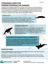 Stronger Laws for Marine Mammals