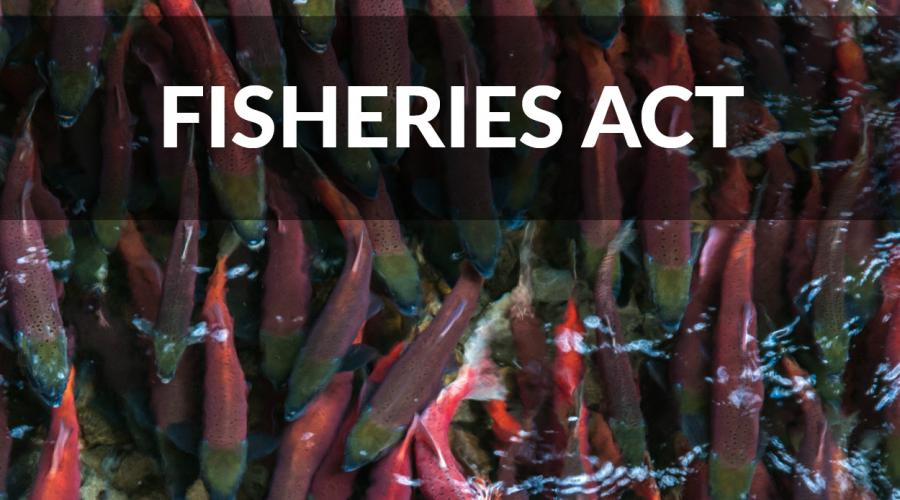 Fisheries Act review