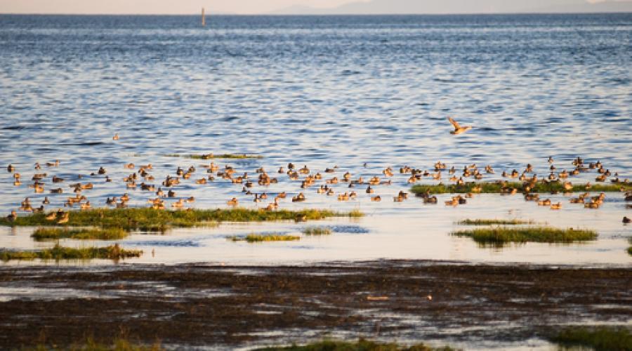 Surrey Bay Mud - Green Waterfront Design